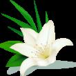 flowerimg1